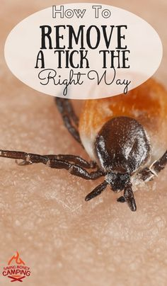 camping how to remove a tick the correct way do you know how to remove
