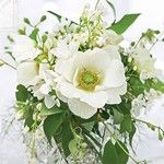 SnapWidget | Learn our techniques and styling - our one day flower school classes are now available to view and book online www.philippacraddock.com #flowerschool