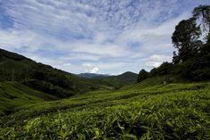 Tea shop Valley of Tea