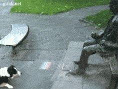 Collie Trying To Get A Statue To Play Fetch (gif)