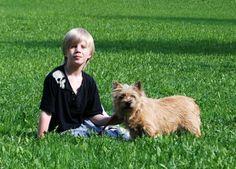 dog Dogs, Sports, Hs Sports, Pet Dogs, Doggies, Sport