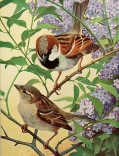 Sparrows and Lilac (63 pieces)
