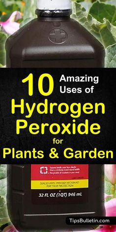 Garden Planning Find out how to best use hydrogen peroxide for plants and in your garden. Includes recipes to fight fungal infections, sanitize seeds, accelerate seed germination, fertilize your plants and using peroxide to keep pests away. Garden Yard Ideas, Lawn And Garden, Garden Projects, Indoor Garden, Garden Landscaping, Big Garden, Garden Fun, Fruit Garden, Ants In Garden