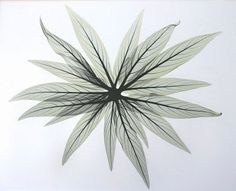 xray art - Google Search