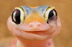 32 magnifiques photos de reptiles 2