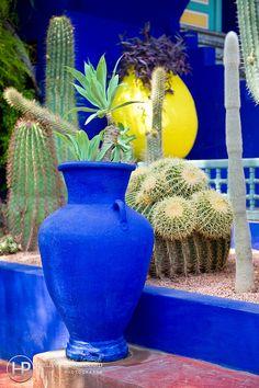 size: Photographic Print: Jardin Majorelle - Marrakech - Morocco - North Africa - Africa by Philippe Hugonnard : Artists Moroccan Garden, Moroccan Theme, Indian Wedding Receptions, Wedding Mandap, Peach Wedding Invitations, Marrakech Morocco, Marrakech Gardens, Wedding Stage Decorations, Cactus Y Suculentas