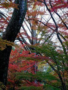 紅葉も見頃に近づいた兼六園山崎山 Kanazawa, Scenery, Plants, Landscape, Plant, Paisajes, Nature, Planets
