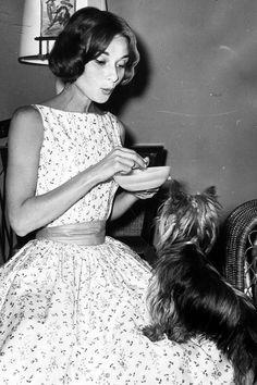 missingaudrey: eu ando com meus cachorros, o que me mantém em forma. Eu falo com os meus cães, o que me mantém sã. Eu não consigo pensar em qualquer coisa que faz mais feliz do que um abraço e jogar e começar o dia com um filhote de cachorro quente. Audrey Hepburn com o Sr. famoso em 1957.