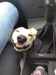 El perro sonriente online dating