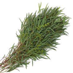 Willow Seeded Eucalyptus Bunch 350 6559b85a
