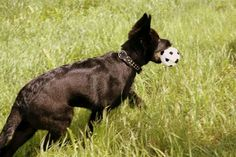 James as a puppy