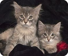 Pin On Help Save Rescues Precious Little Souls