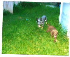 Duke & Yogi, first day