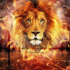 LIon of Judah glowing in fire Art Listen to the Sound Lion King Art, Lion Of Judah, Lion Art, Lion Live Wallpaper, Animal Wallpaper, Osiris Tattoo, Fire Lion, Lions Live, Lion Photography