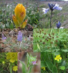 1000 images about garden on pinterest deer resistant