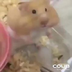 Cute Little Animals, Cute Funny Animals, Funny Cute, Cute Cats, Funny Animal Videos, Funny Animal Pictures, Animal Memes, Funny Videos, Funny Hamsters