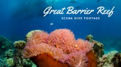 The Great Barrier Reef Dive Footage - Lo On The Go