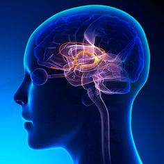 What Is the Limbic System? (Plus How to Keep It Healthy