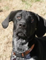 Beck is an #adoptable Coonhound Dog in #Chattanooga, #TENNESSEE. Please contact Tricia ( tricia@mckameyanimalcenter.org ) for more information about this pet. We have many more dogs and cats at the McKamey Anim...