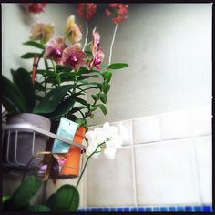 orchids in the shower