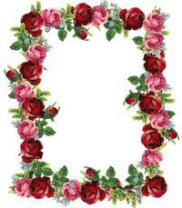 free rose frame: