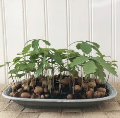 Ekollon lasagne | Johanna Bradford Potted Plants, Garden Plants, Indoor Plants, House Plants Decor, Plant Decor, All About Plants, Growing Plants, Plant Care, Dream Garden