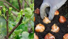 15 Common Gardening Mistakes Everyone Makes Planting Vegetables, Growing Vegetables, Growing Plants, Home Landscaping, Landscaping With Rocks, Gardening Books, Gardening Tips, Container Gardening, Common Garden Plants