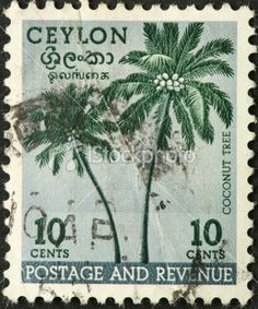 coconut palms on an old Ceylon (Sri Lanka) stamp Royalty Free Stock Photo