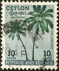 coconut palms on an old Ceylon (Sri Lanka) stamp Royalty Free Stock Photo