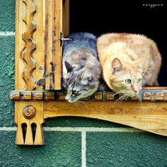 Tu vigila este lado y yo el otro!!