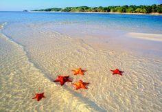 beachstars