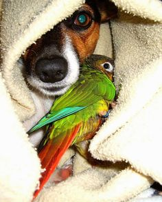 JRT and parrot friend