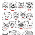 16匹の猫たちのカード【5枚セット】