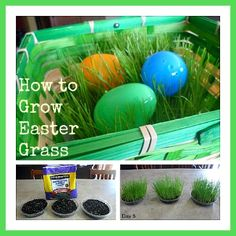 How to Grow Easter Grass