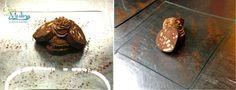 Salamino al cioccolato