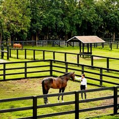 horses in their pastures in Florida