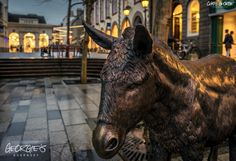 Matilda's burnished bronze reflecting the shop lights on this damp old Tuesday evening in Market Square, St Peter Port. #Guernsey #GreatThings  Link to the whole collection of 'Georgie's Guernsey' :-http://chrisgeorge.dphoto.com/#/album/4daaes  Picture Ref: 26_01_16 — in St. Peter Port, Guernsey, Channel Islands.