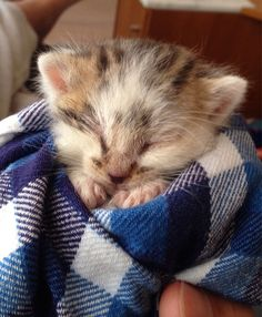 We Found Him Crying All Alone In The Grass. He Was Only Two Weeks Old And…
