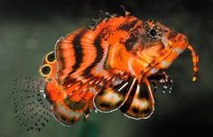 Lionfish by Valy Wagner Frosch Illustration, Sea Aquarium, Deep Sea Creatures, Sea Colour, Marine Fish, Beautiful Fish, Sea Fish, Gone Fishing, Underwater World
