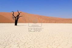 Sossusvlei dead valley landscape in the Nanib desert near Sesriem, Namibia