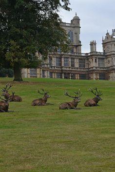 Wollaton Hall and Deer Park, Nottingham - England