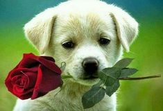 Good Morning Images Wallpaper Pictures Pics For Puppy Lover