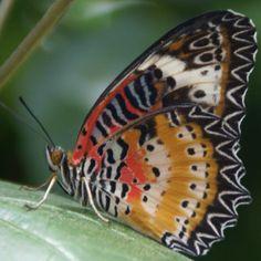 More Butterfly Garden, Grand Cayman
