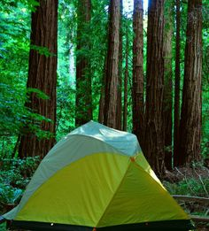 Camp among giants at Redwood National Forest.