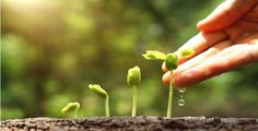 The Self-sufficient Garden - 18 Plants & Trees That Can Survive a Drought