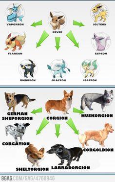 Corgis, The Pokemon of the Dog World. @Leilani Garcia Garcia Paco