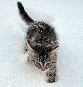 Il gatto: alimentazione e toeletta, qui: http://pilloline.altervista.org/cosa-mangia-il-gatto-e-il-bagno/