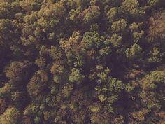 Aerial Photograph of trees in the Ozark Mountains of Arkansas. www.ozarkdrones.com #drone #arkansas #ozarks