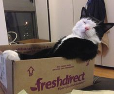 10 Cats That Just Found The Perfect Box