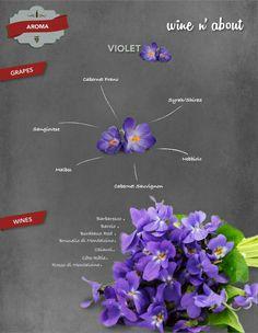 Aromas of wine : Violet